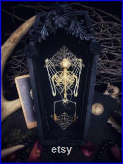 Squelette de chauve-souris cercueil