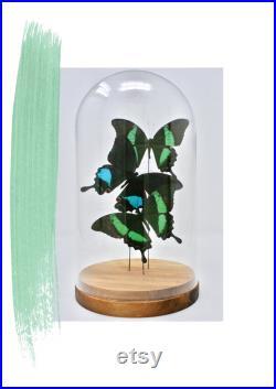 Supergreens Grand Dôme 0053 entomologie éthique Royaume-Uni