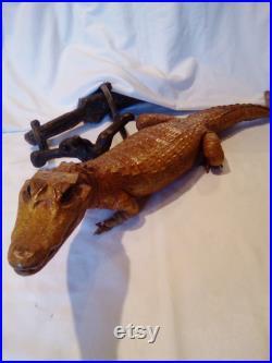 Taxedermy crocodilem animal farci, animal d affichage de peau d article, africain, sud-américain.collectable curiosité décoration à la maison. vintage antique