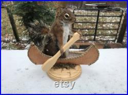 Taxidermie Bel écureuil pin pagayer dans canoë Log Cabin Hunting Decor Tamiasciurus hudsonicus