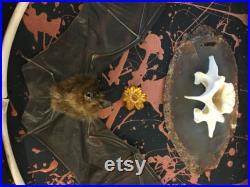 Taxidermie Shadowbox Bat OS Agate Géode tranche fleur bizarrerie décoration