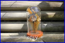Taxidermie Tête de poulet Momifiée Coq Bell Jar