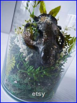 Terrarium de castor cristallisé