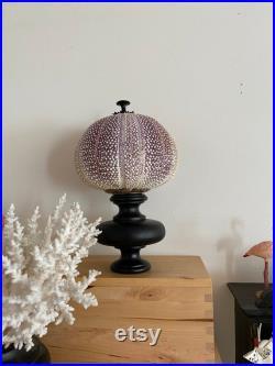 Test oursin mer du nord violet sur socle laiton et bois tourné XIXème. Curiosités