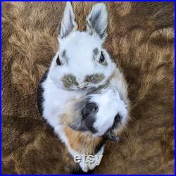 U24B Taxidermy curiosités bizarreries Anthropomorphic Bunny Rabbit Head avec Baby Mount Display Collectible conservé Curiosity Home Decor