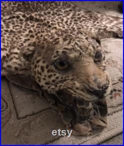 Vendu pour M. Nelson Pas à vendre.Leopard Skin Tapis vintage années 1930-40s Taxidermie Big Cat Home Decor