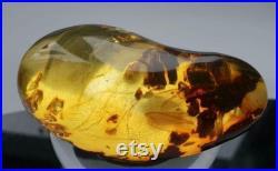 Véritable pierre d ambre baltique naturelle cinq insectes 31,4 g Inclusion mbar Genuino Ambra Autentica