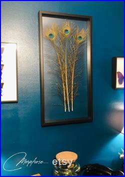 Véritables plumes de Paon, sous cadre en bois noir et film transparent. Décoration murale pour cabinet de curiosités.
