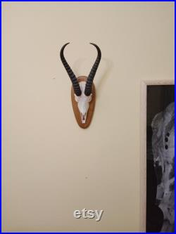 Vintage Antelope Skull with Horns Antlers Gothic Taxidermy Collectable Anatomy Home Decor Exhibit Vintage Antelope Skull with Horns Antlers Gothic Taxidermy Collectable Anatomy Home Decor Exhibit Vintage Antelope Skull with Horns Antlers Gothic Taxidermy Collectable Anatomy Home Decor Exhibit Vintage An