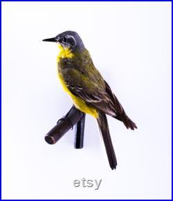 Vraie taxidermie Bergeronnette printanière Oiseau Animal empaillé Trophée de chasse Décoration de maison Motacilla flava