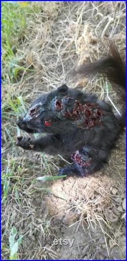 Zombie Taxidermy écureuil noir renversant la nouveauté de montage d oiseau obscure bizarreries de la faune de la faune chasse décor renard lapin coyote