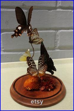 diorama vintage de papillon de taxidermie sous le dôme en verre