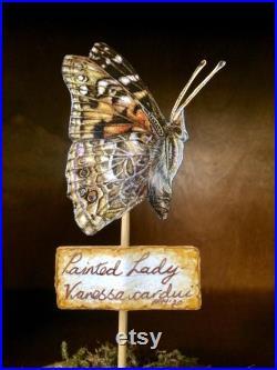 dôme papillon éthique vintage-look. Belle et scientifiquement précise.