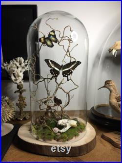 globe, curiosité ,papillon, crâne, fleurs sechées, taxidermie,