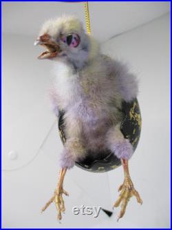 taxidermie d oiseau vrai poussin de bébé busting hors de l oeuf de Pâques