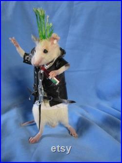 taxidermie rat punk taxidermy rat punk cabinet de curiosité oditties