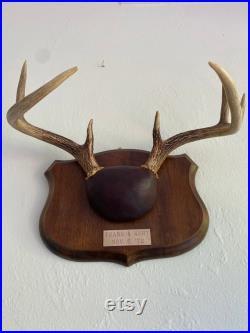 vintage Deer Antlers withplaque 1972