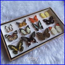 vintage Real Taxidermy Butterfly Mix Bois Encadré Insectes Collection Décoration Maison Display Design Cadeau Nature Mur Best Sellers Entomologie