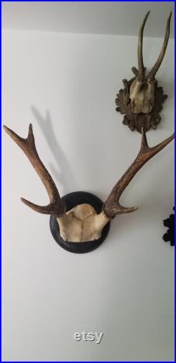 vintage collection allemande de 3 Black Forest Hunting Trophy Roe Deer Plaques 1930